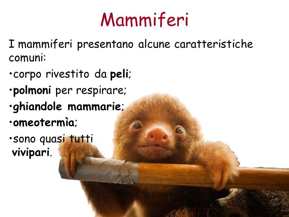 Mammiferi I mammiferi presentano alcune caratteristiche comuni: