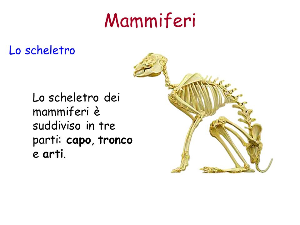 Mammiferi Lo scheletro
