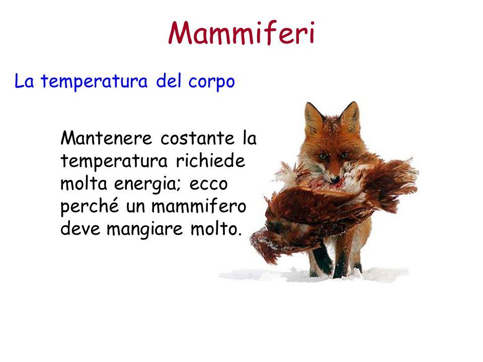 Mammiferi La temperatura del corpo