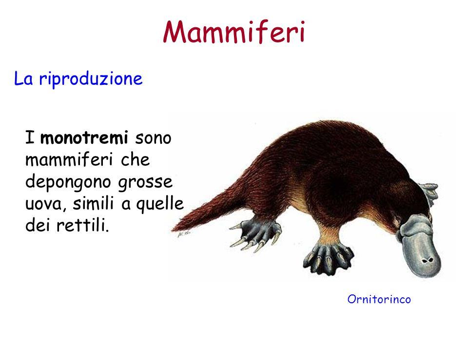 Mammiferi La riproduzione