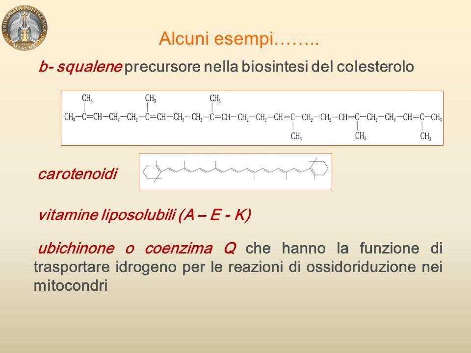 Alcuni esempi…….. b- squalene precursore nella biosintesi del colesterolo. carotenoidi. vitamine liposolubili (A – E - K)