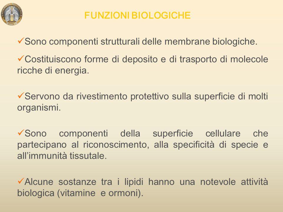 FUNZIONI BIOLOGICHE Sono componenti strutturali delle membrane biologiche.