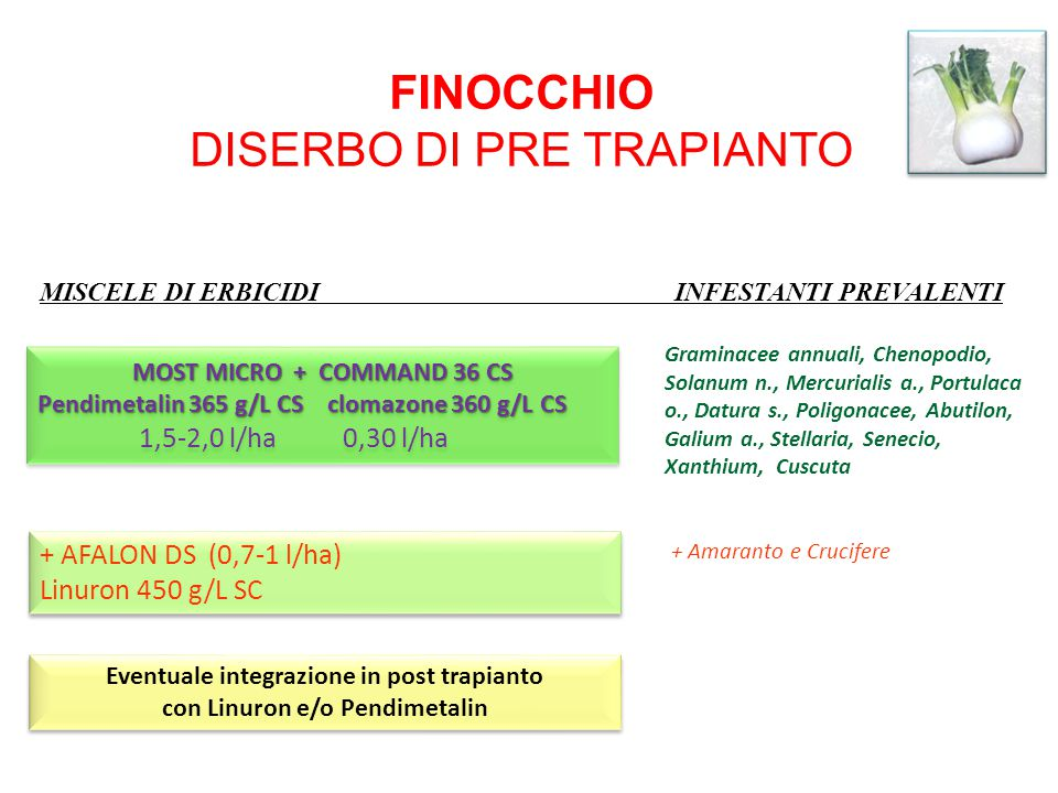 Eventuale integrazione in post trapianto con Linuron e/o Pendimetalin
