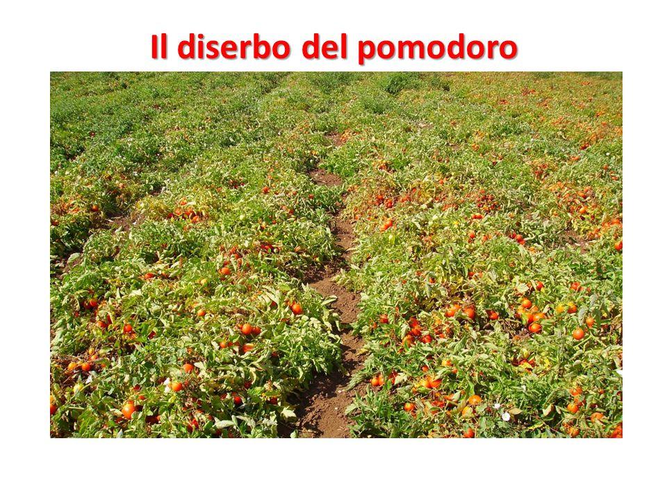 Il diserbo del pomodoro