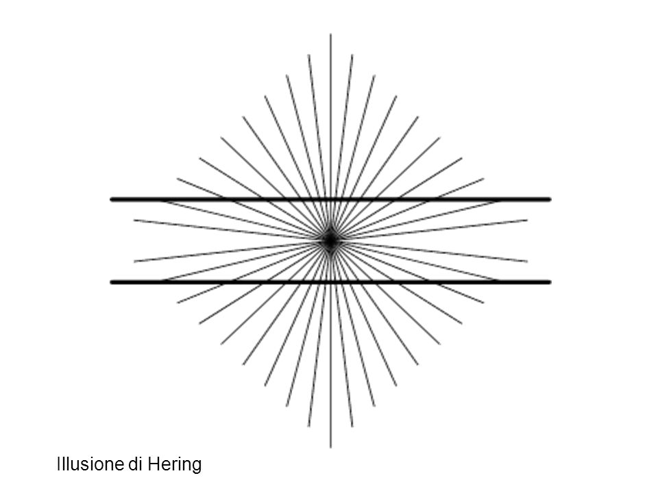 Illusione di Hering