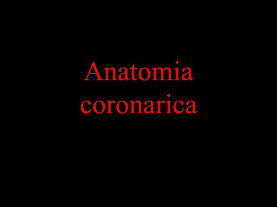 Anatomia coronarica