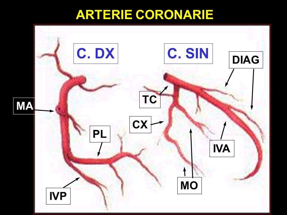 ARTERIE CORONARIE C. DX C. SIN DIAG TC MA CX PL IVA MO IVP