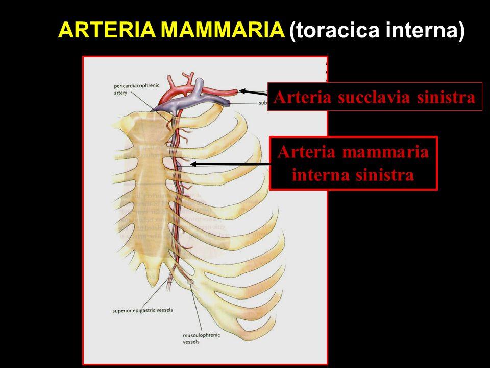 Arteria succlavia sinistra