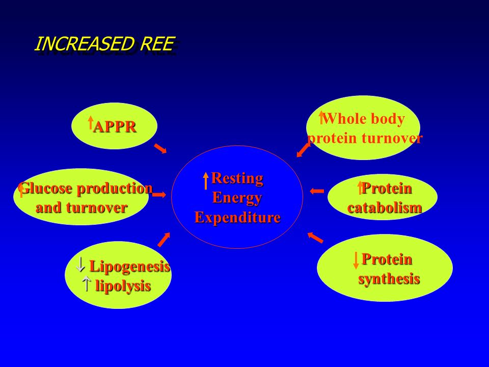 INCREASED REE Whole body APPR protein turnover Resting Energy