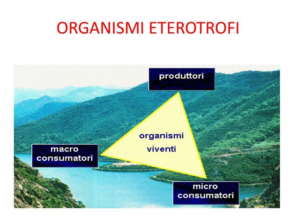 ORGANISMI ETEROTROFI