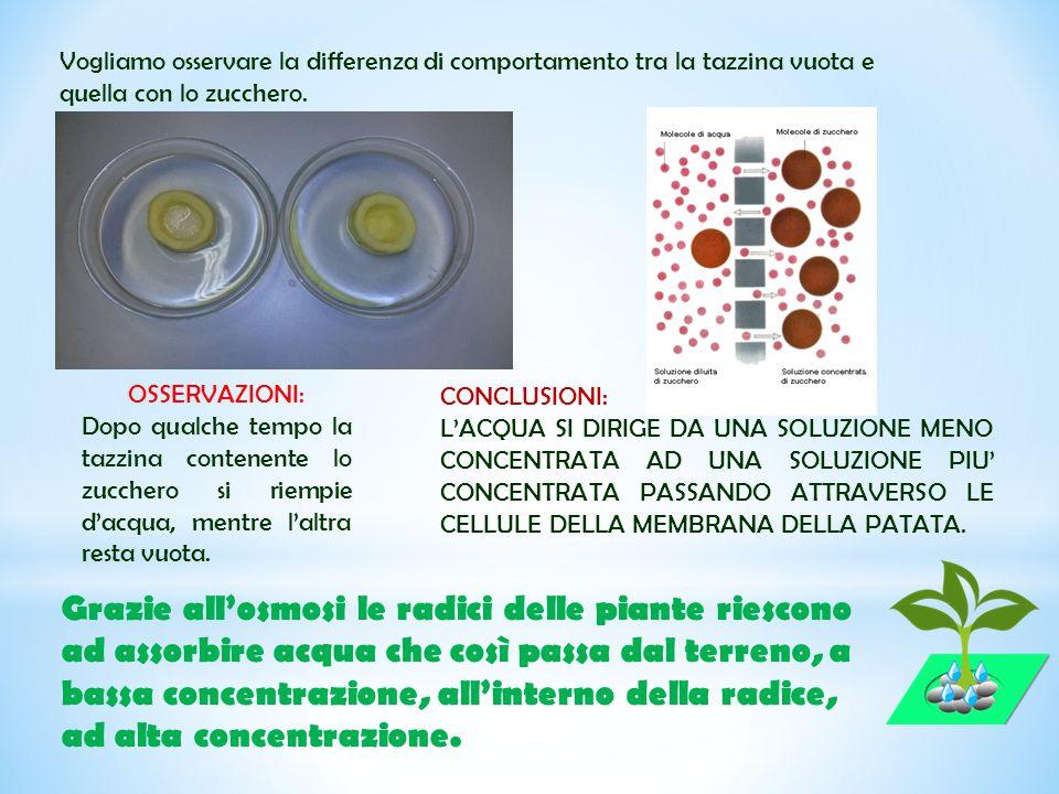 Vogliamo osservare la differenza di comportamento tra la tazzina vuota e quella con lo zucchero.