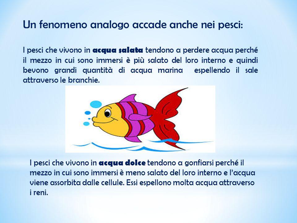 Un fenomeno analogo accade anche nei pesci: