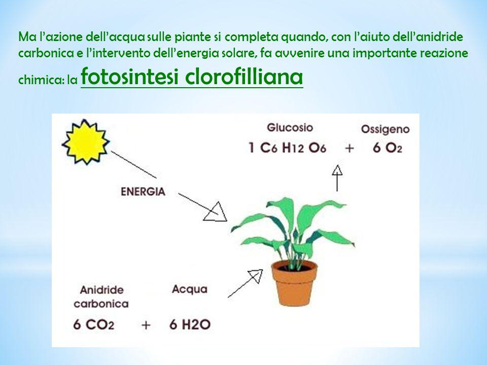 Ma l'azione dell'acqua sulle piante si completa quando, con l'aiuto dell'anidride carbonica e l'intervento dell'energia solare, fa avvenire una importante reazione chimica: la fotosintesi clorofilliana