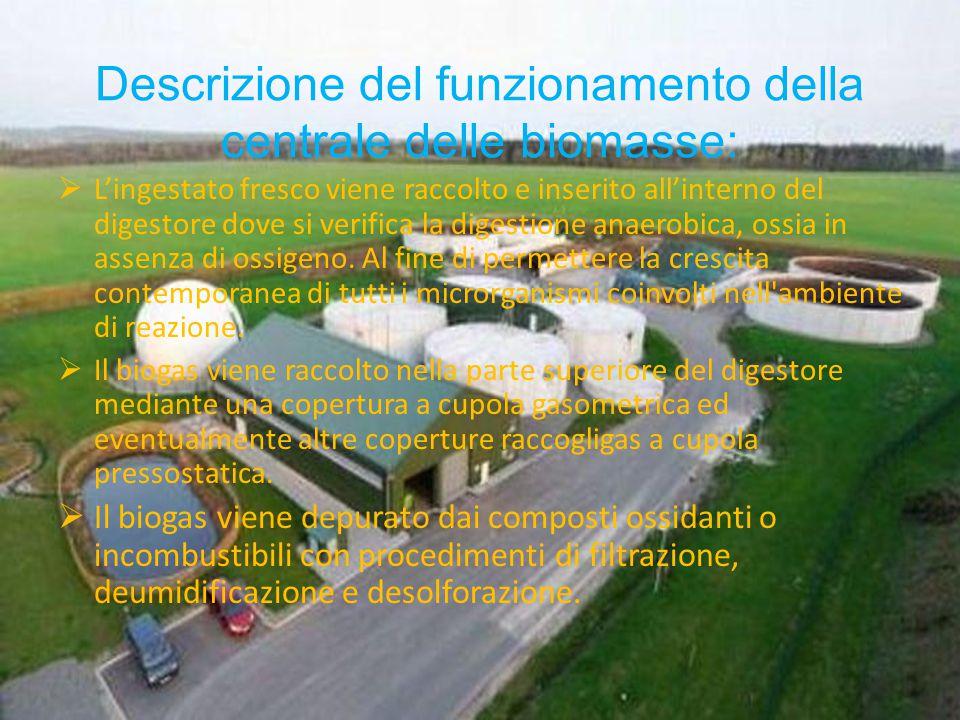 Descrizione del funzionamento della centrale delle biomasse: