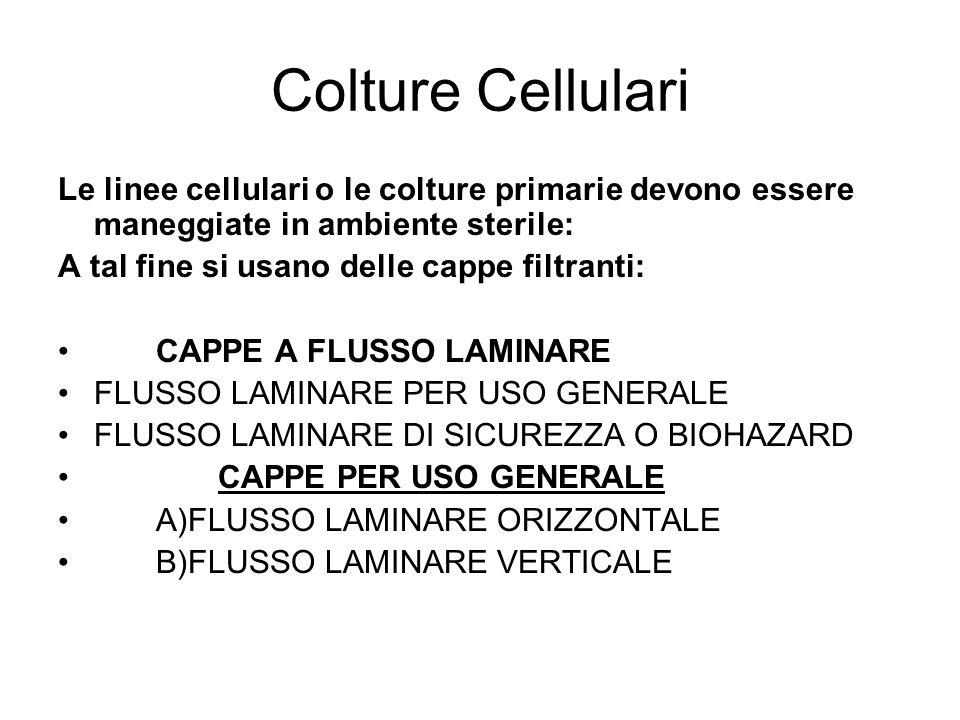 Colture Cellulari Le linee cellulari o le colture primarie devono essere maneggiate in ambiente sterile:
