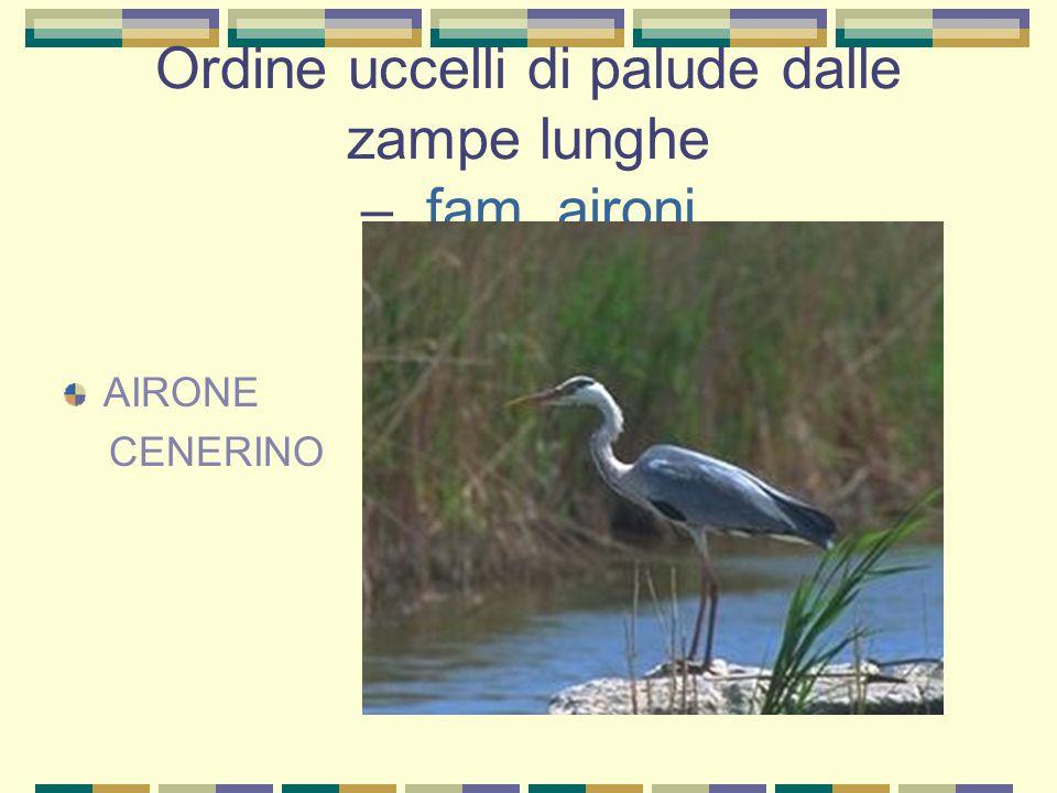 Ordine uccelli di palude dalle zampe lunghe – fam. aironi