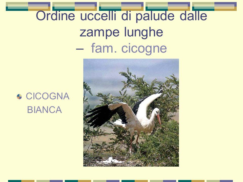 Ordine uccelli di palude dalle zampe lunghe – fam. cicogne