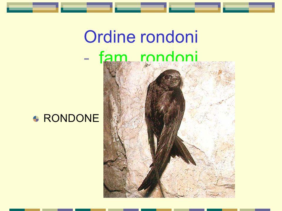 Ordine rondoni - fam. rondoni