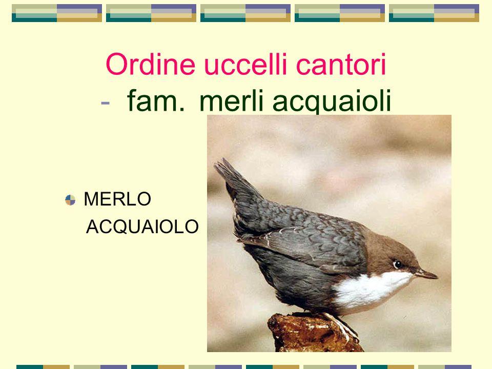 Ordine uccelli cantori - fam. merli acquaioli