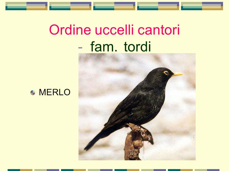 Ordine uccelli cantori - fam. tordi