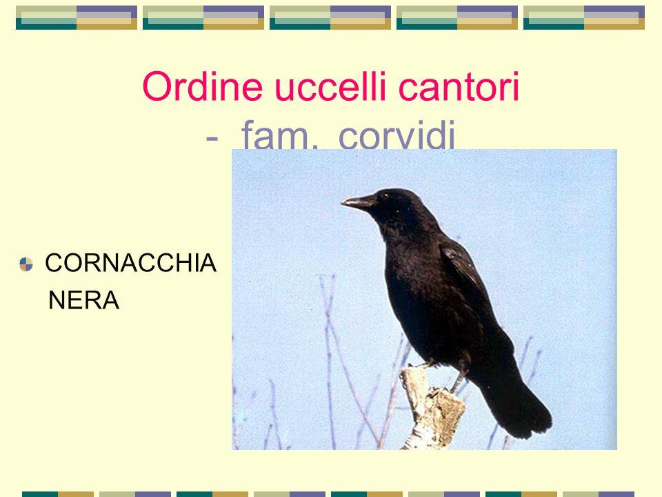 Ordine uccelli cantori - fam. corvidi