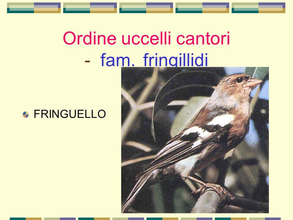 Ordine uccelli cantori - fam. fringillidi