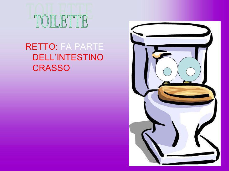 TOILETTE RETTO: FA PARTE DELL'INTESTINO CRASSO H/O game word play