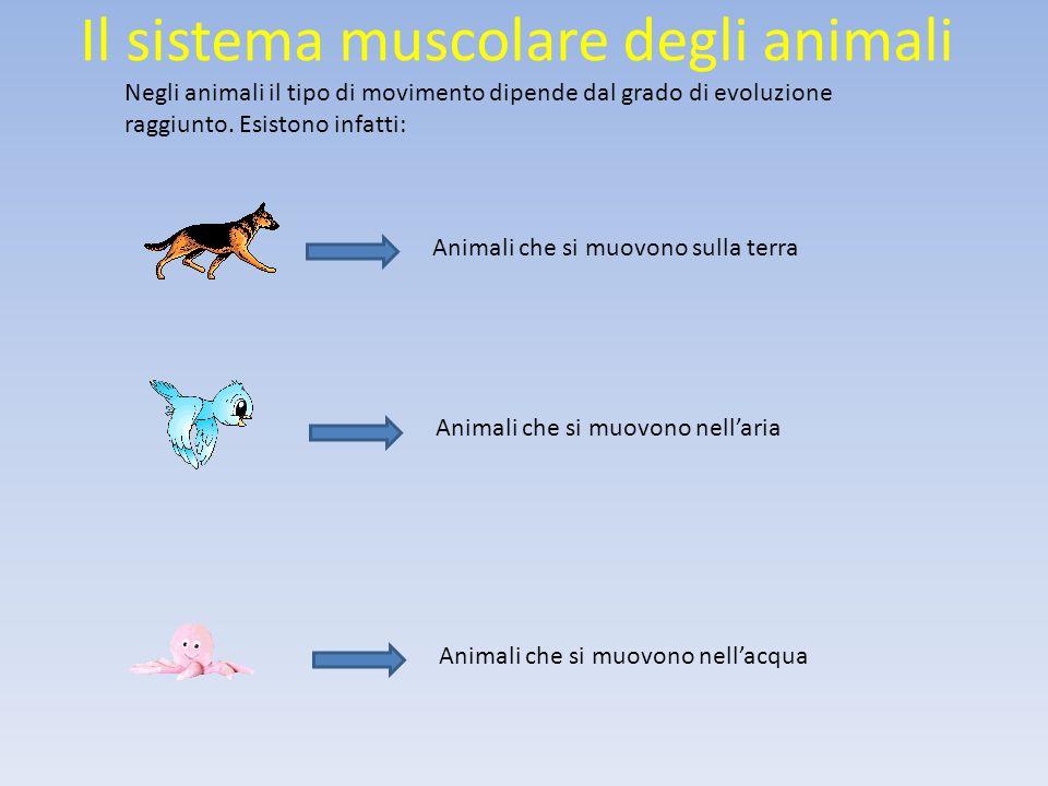 Il sistema muscolare degli animali