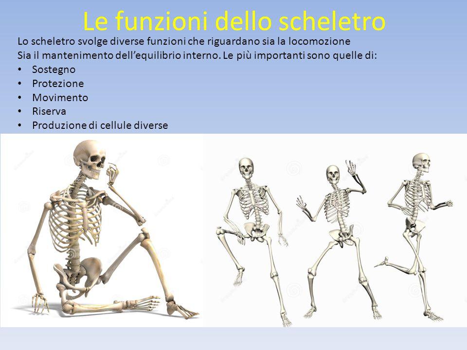 Le funzioni dello scheletro