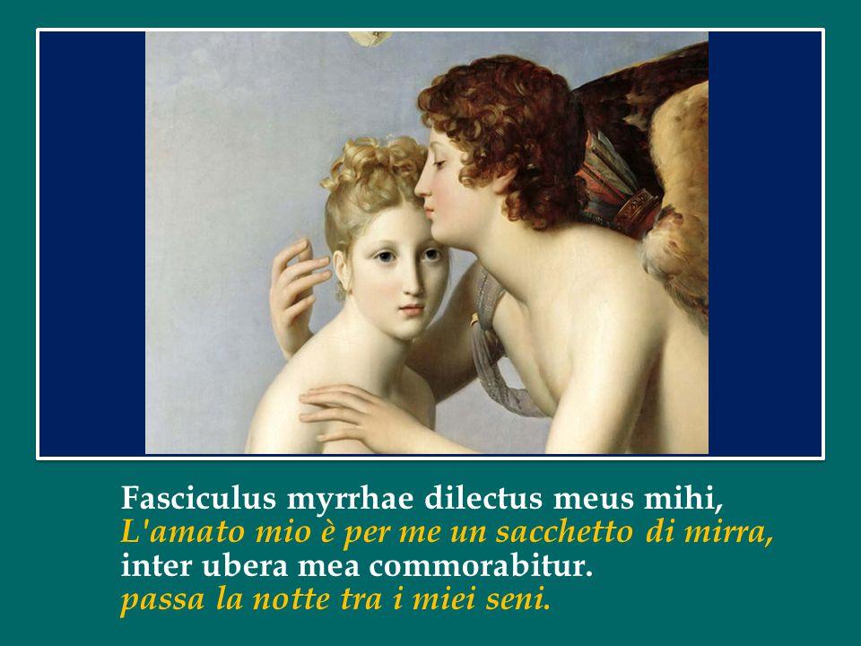 Fasciculus myrrhae dilectus meus mihi, L amato mio è per me un sacchetto di mirra, inter ubera mea commorabitur.