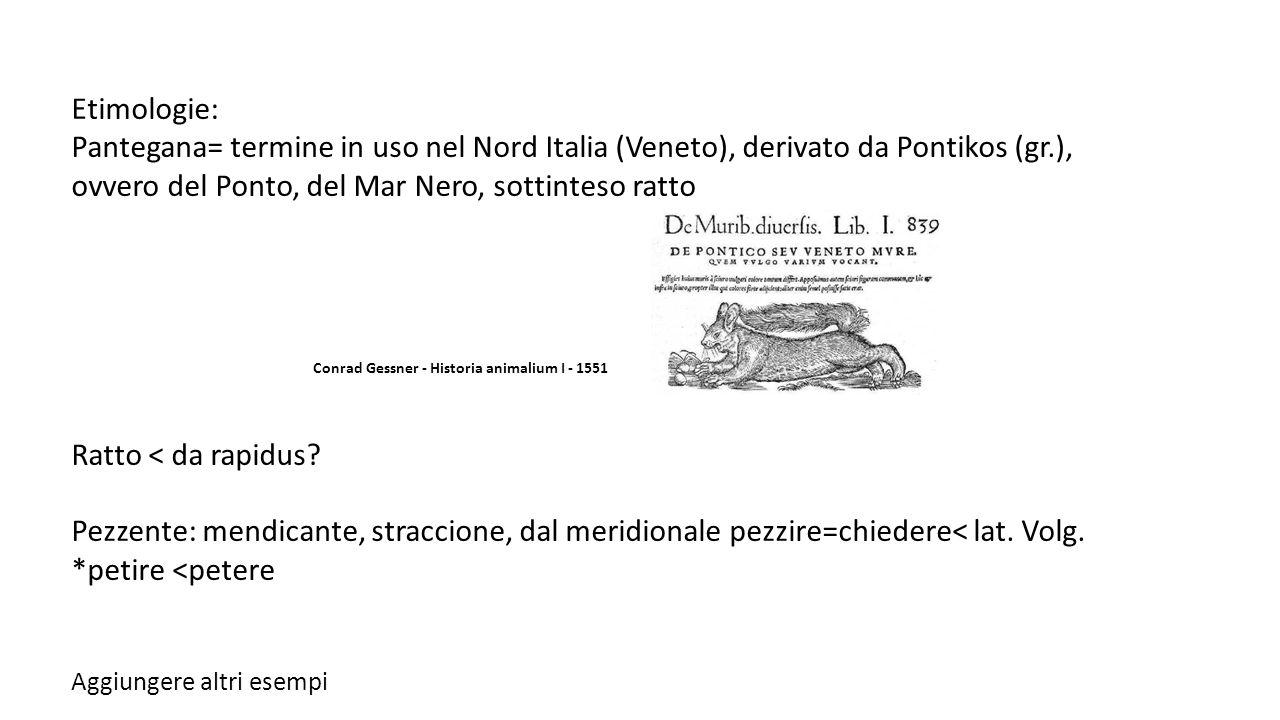 Etimologie: Pantegana= termine in uso nel Nord Italia (Veneto), derivato da Pontikos (gr.), ovvero del Ponto, del Mar Nero, sottinteso ratto.