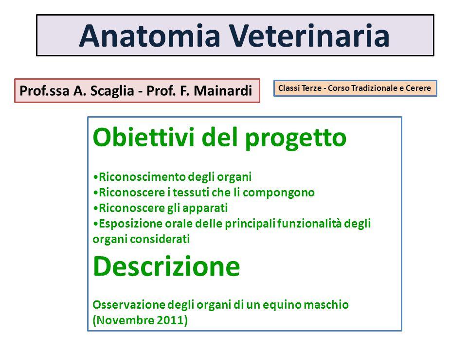 Anatomia Veterinaria Descrizione Obiettivi del progetto
