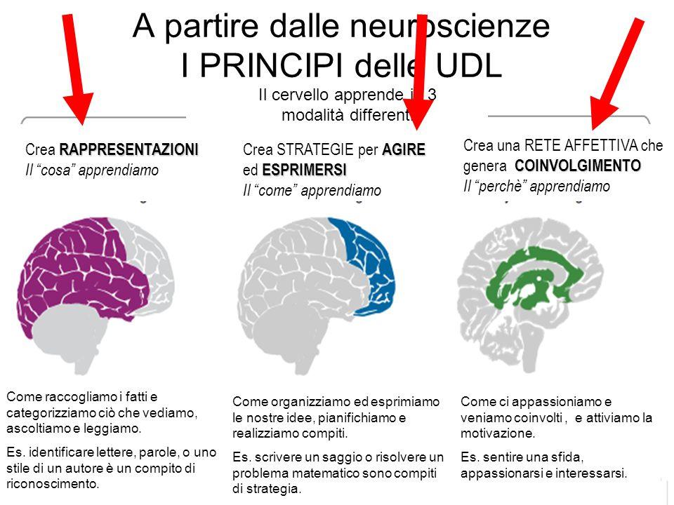 A partire dalle neuroscienze I PRINCIPI delle UDL