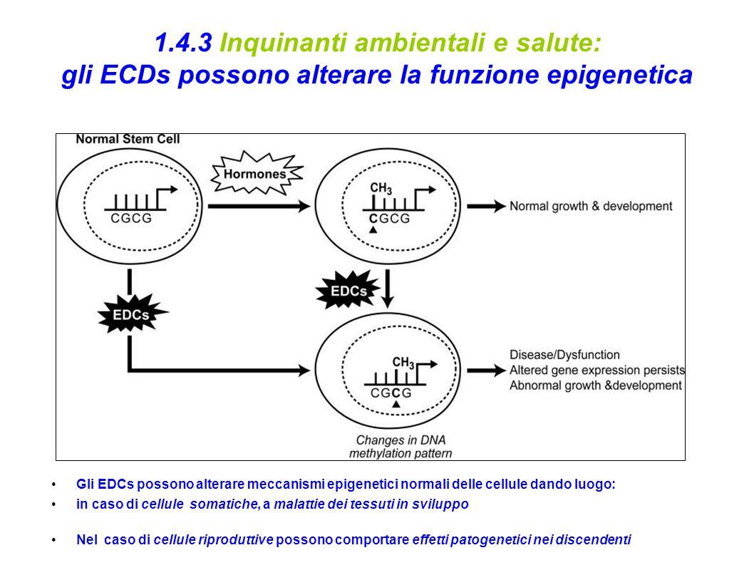 1.4.3 Inquinanti ambientali e salute: gli ECDs possono alterare la funzione epigenetica