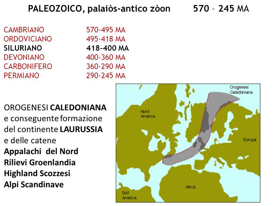 PALEOZOICO, palaiòs-antico zòon 570 – 245 MA