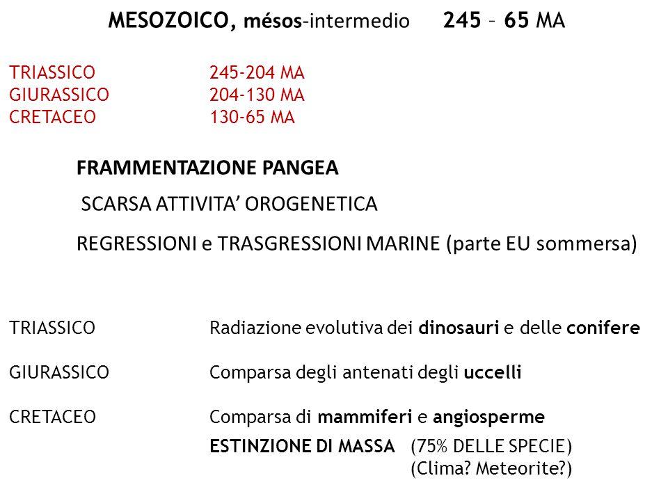 MESOZOICO, mésos-intermedio 245 – 65 MA