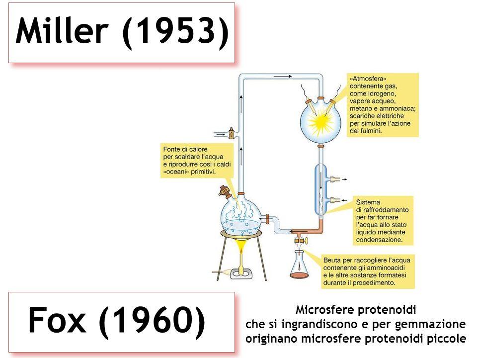 Microsfere protenoidi