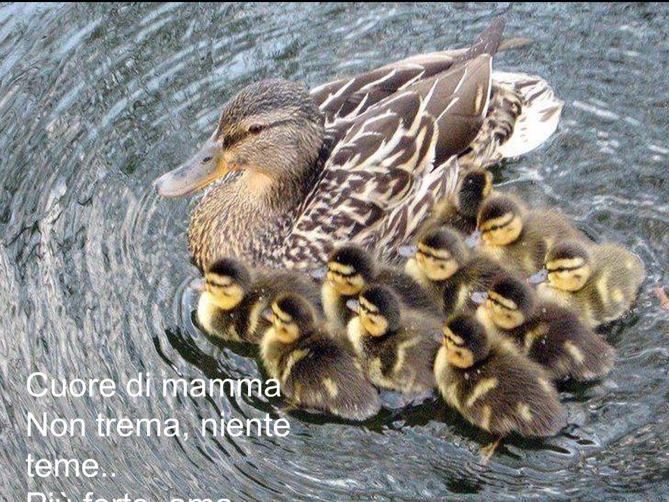 Cuore di mamma Non trema, niente teme.. Più forte, ama.