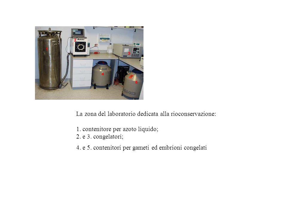 La zona del laboratorio dedicata alla rioconservazione:
