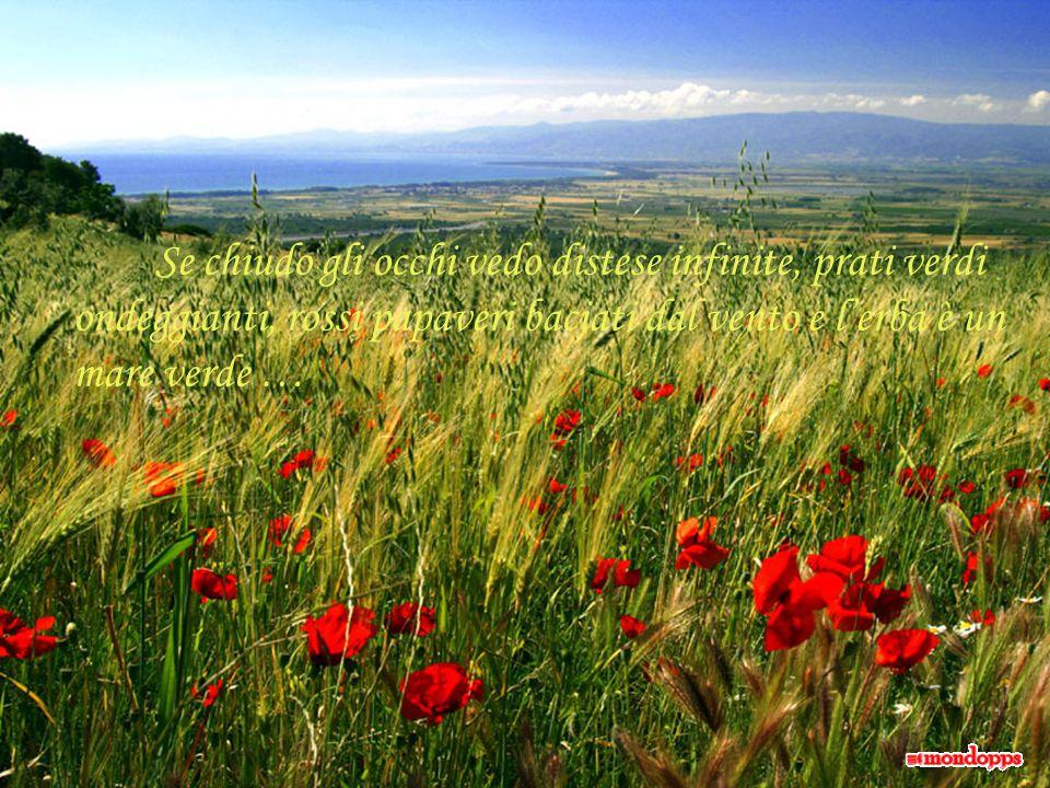 Se chiudo gli occhi vedo distese infinite, prati verdi ondeggianti, rossi papaveri baciati dal vento e l'erba è un mare verde …