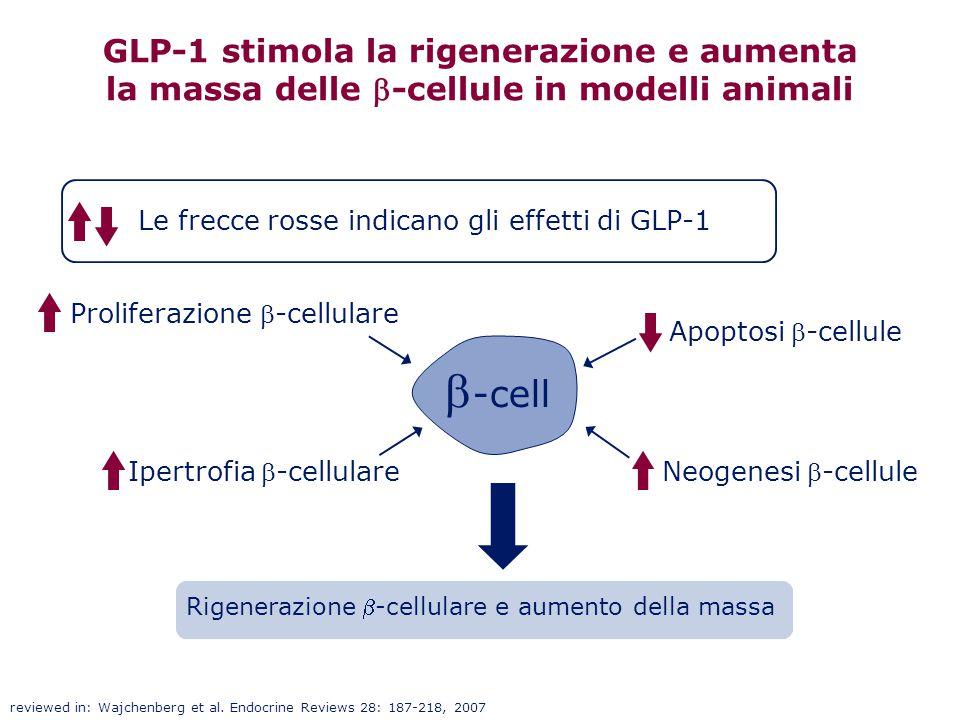 GLP-1 stimola la rigenerazione e aumenta la massa delle b-cellule in modelli animali