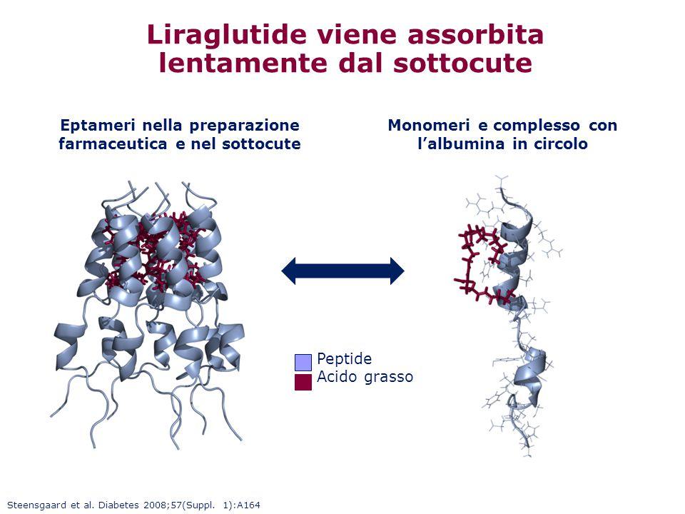 Liraglutide viene assorbita lentamente dal sottocute