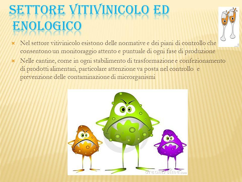 SETTORE VITIVINICOLO ED ENOLOGICO