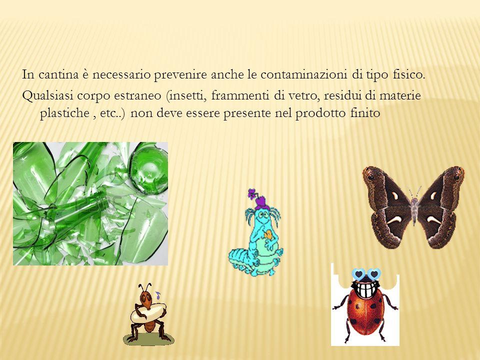 In cantina è necessario prevenire anche le contaminazioni di tipo fisico.
