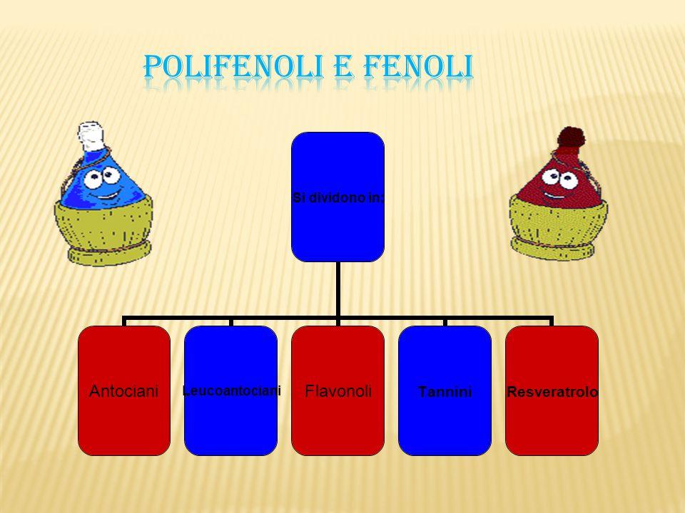 POLIFENOLI E FENOLI