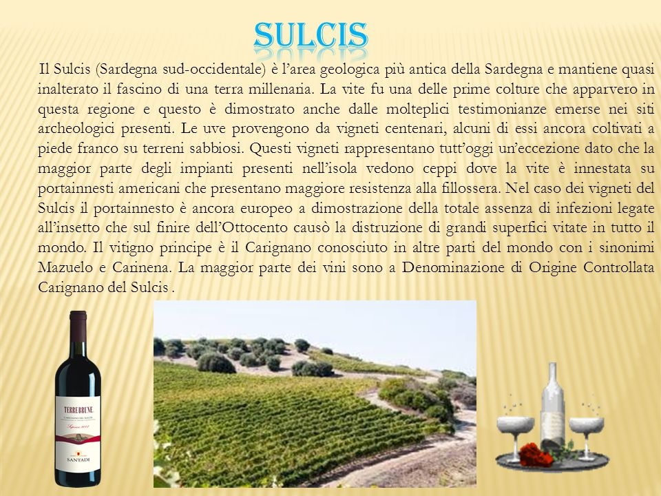SULCIS