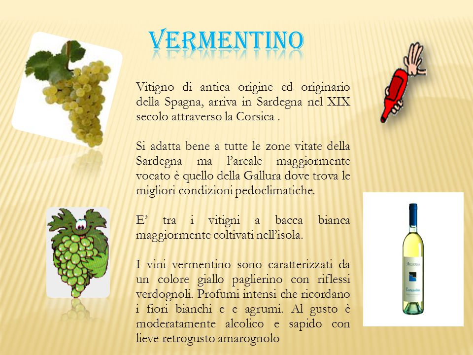 VERMENTINO Vitigno di antica origine ed originario della Spagna, arriva in Sardegna nel XIX secolo attraverso la Corsica .