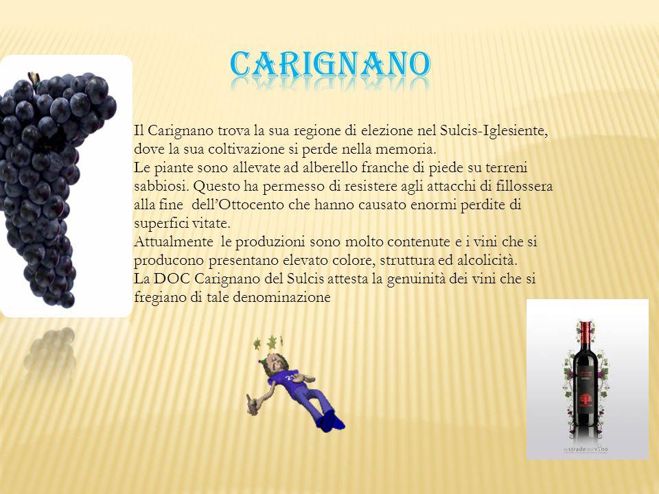 carignano Il Carignano trova la sua regione di elezione nel Sulcis-Iglesiente, dove la sua coltivazione si perde nella memoria.