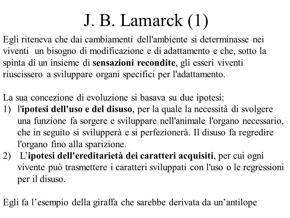 J. B. Lamarck (1) Egli riteneva che dai cambiamenti dell ambiente si determinasse nei.