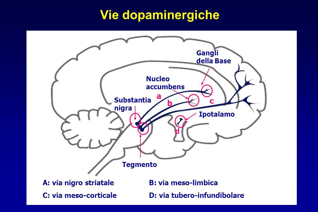 Vie dopaminergiche a c b d A: via nigro striatale B: via meso-limbica